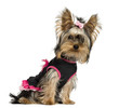 Dressed-up Yorkshire Terrier puppy, looking at the camera