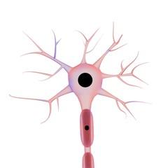 neurone su sfondo bianco