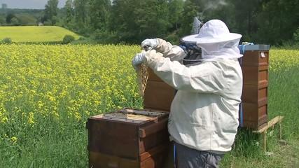 bienen & Imker / Bees & Beekeeper