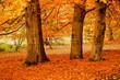 Fototapeten,herbst,autumn leaf,bäume,park