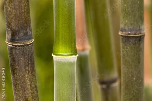 Bambusstäbe © C. Schüßler