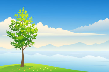 Summer tree background