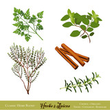 Herbs and Spices: Chervil, Oregano, Thyme, Cinnamon, Rosemary