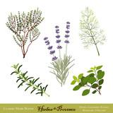 Fototapety Herbes de Provence: Lavender, Rosemary, Thyme, Fennel, Oregano