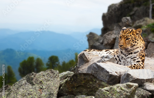 Tuinposter Luipaard leopard on rock