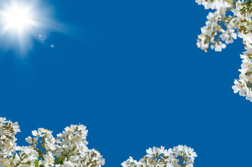 Pattern with white flowers on blue sky