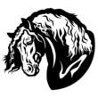 draft horse head