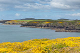 St Brides Bay Caerfai to St Non`s Pembrokeshire West Wales UK