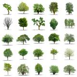 Fototapety lot d'arbres sans feuilles sur fond blanc en haute définition