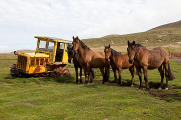 Old dredger and horses