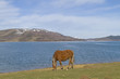 Pferdefreiheit am Lago di Campotosto