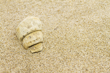 Fossil mollusk in the sand