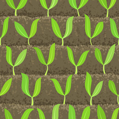 sprout, shoot vegetable patches in row seamless