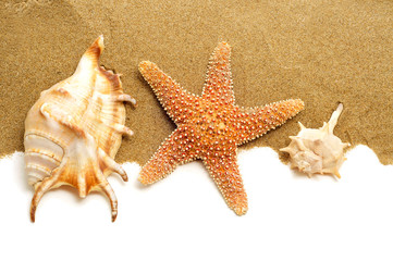 conch shells and starfish on the sand