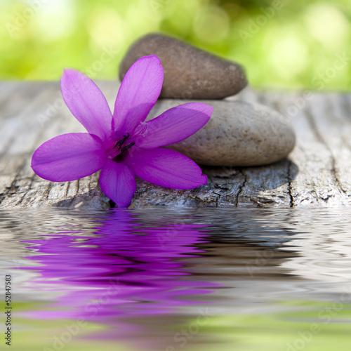 flor natural con piedras y agua