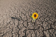 canvas print picture - dry soil and growing plant