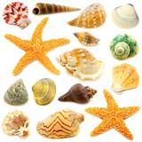 Assortment of sea shells individually isolated on white