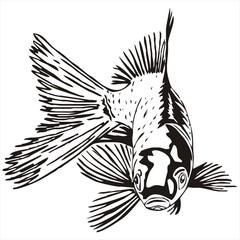 goldfish sketch vector