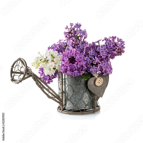 flowers of lilac in the garden watering can