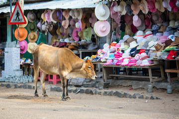 A cow on the background of hats sold