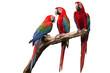 parrot - 52853756