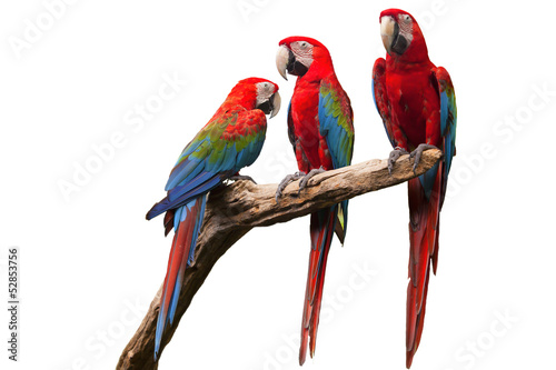 Tuinposter Papegaai parrot
