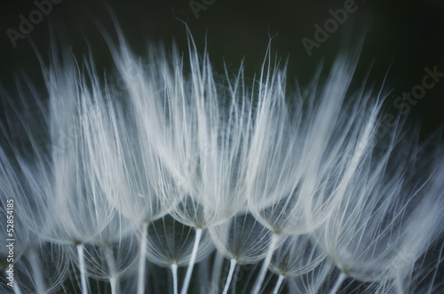 extreme close up to dandelion
