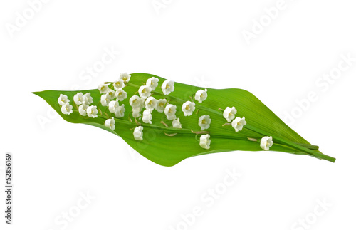 Papiers peints Muguet de mai Leaf and Flowers of Lily of the Valley