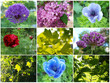 Set Frühlingsmotive im Wonnemonat Mai