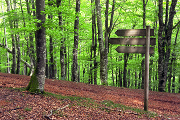 wooden signpost in beech forest