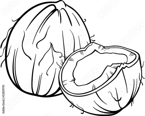 coconut illustration for coloring book