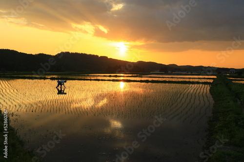 夕日と春の水田