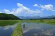青空と春の水田