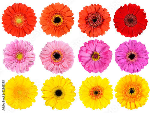 Foto op Canvas Madeliefjes Collection of Fresh Gerbera Flowers Isolated on White