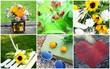 composition florale d'été