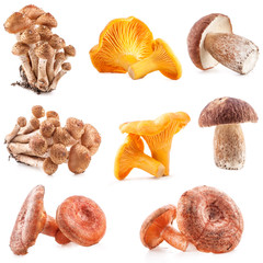 Collection of Edible wild mushroom isolated on white