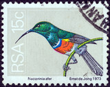 Greater double-collared sunbird (South Africa 1974)