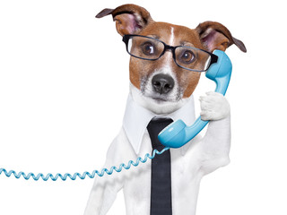 business dog on the phone
