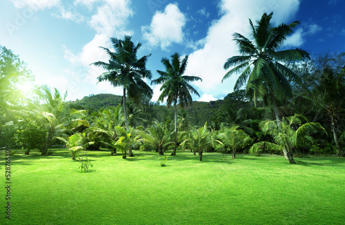 field of grass and coconut palms on Praslin island, Seychelles