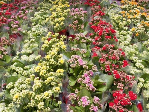 Papiers peints Azalea flower garden