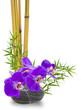 bambou, orchidée et galet zen