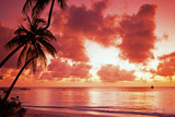 Palm tree at sunset, Tobago, Caribbean © Arena Photo UK
