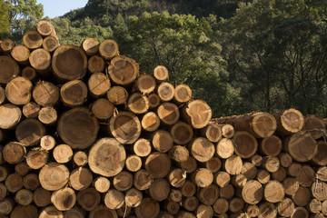 森の前に積み上げられた丸太
