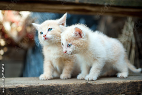 two little red kitten