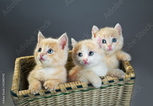 three red kittens
