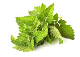 Fresh green leaves of melissa