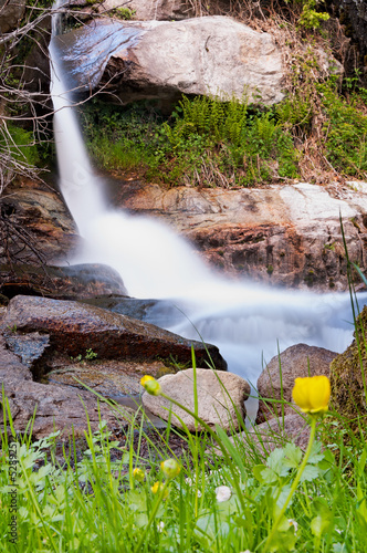 Flowers in the waterfall - Vertical
