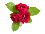Red rose flowers with leaves