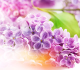 Lilac flowers. Floral background for design