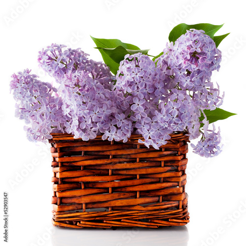 Lilac flowers in a basket on a white background